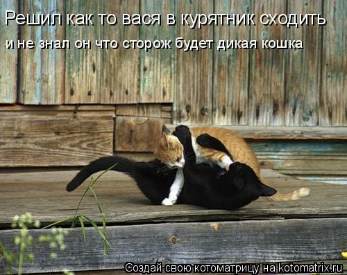 Котоматрица: Решил как то вася в курятник сходить и не знал он что сторож будет дикая кошка