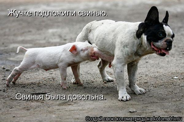 Котоматрица: Жучке подложили свинью. Свинья была довольна.