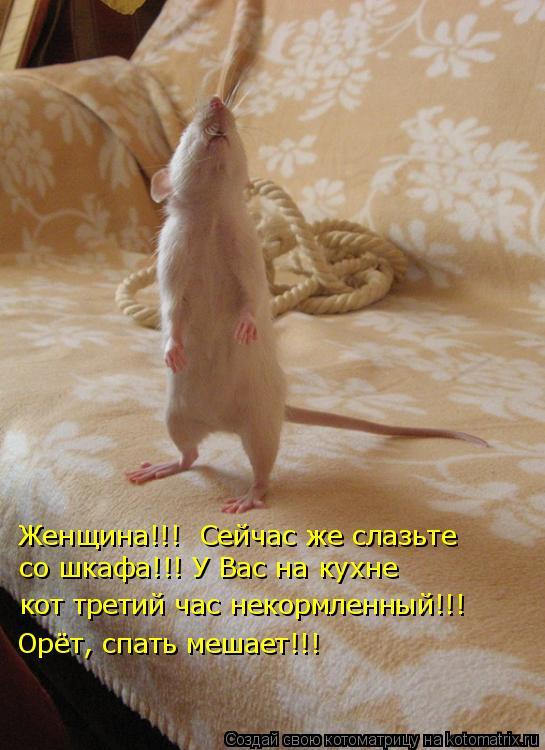 Котоматрица: Женщина!!!  Сейчас же слазьте  со шкафа!!! У Вас на кухне кот третий час некормленный!!! Орёт, спать мешает!!!