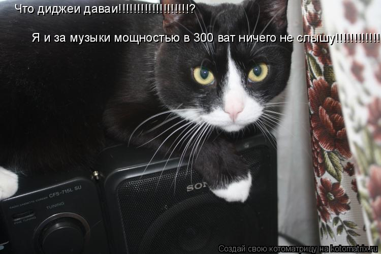 Котоматрица: Что диджеи даваи!!!!!!!!!!!!!!!!!!!? Я и за музыки мощностью в 300 ват ничего не слышу!!!!!!!!!!!!!!!!!