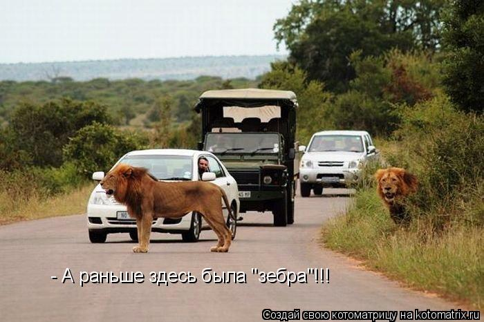 "Котоматрица: - А раньше здесь была ""зебра""!!!"