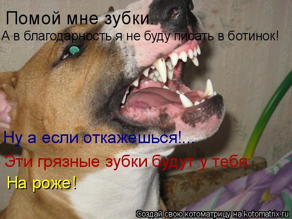 Котоматрица: Помой мне зубки. А в благодарность я не буду писать в ботинок! Ну а если откажешься!... Эти грязные зубки будут у тебя На роже!