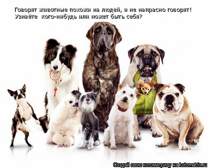 Котоматрица: Говорят животные похожи на людей, и не напрасно говорят! Узнаёте  кого-нибудь или может быть себя?