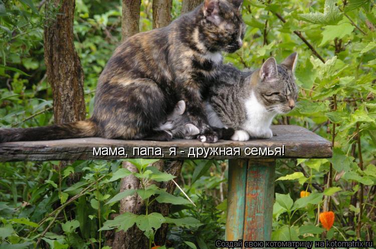Котоматрица: мама, папа, я - дружная семья!