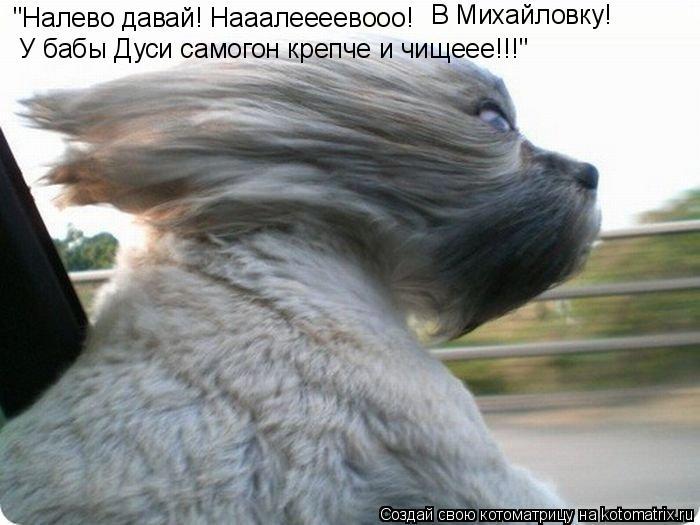 """Котоматрица: """"Налево давай! Нааалеееевооо! В Михайловку!  У бабы Дуси самогон крепче и чищеее!!!"""""""