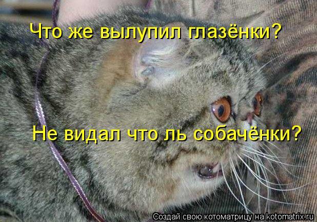 Котоматрица: Что же вылупил глазёнки?  Не видал что ль собачёнки?