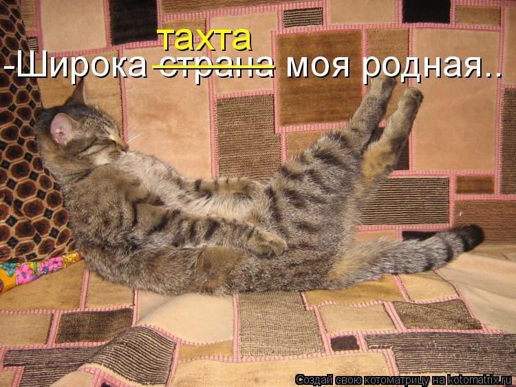 Котоматрица: -Широка страна моя родная.. ______ тахта
