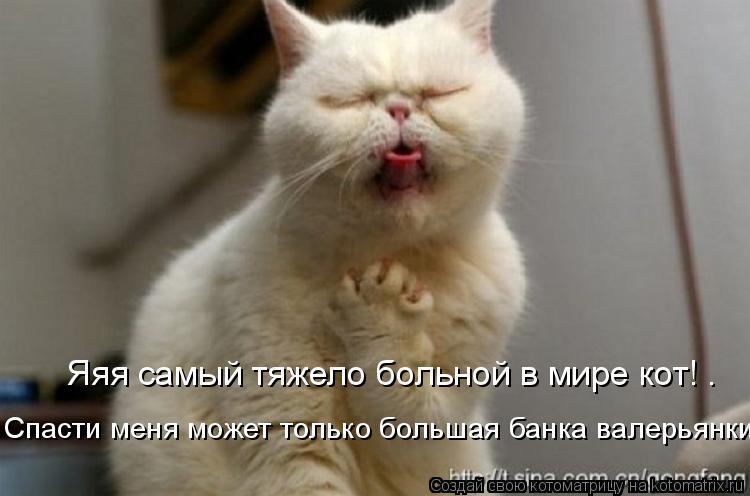 Котоматрица: Яяя самый тяжело больной в мире кот! …  Спасти меня может только большая банка валерьянки!!!