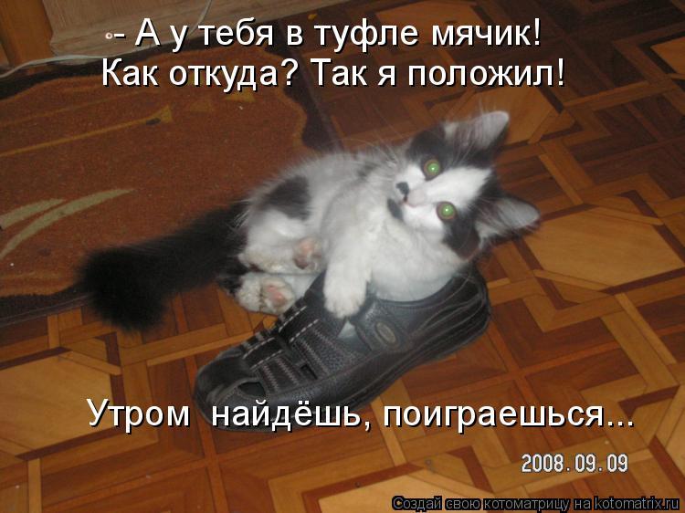 Котоматрица: - А у тебя в туфле мячик! Как откуда? Так я положил! Утром  найдёшь, поиграешься...