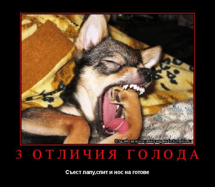 Котоматрица: 3 отличия голода Съест лапу,спит и нос на готове