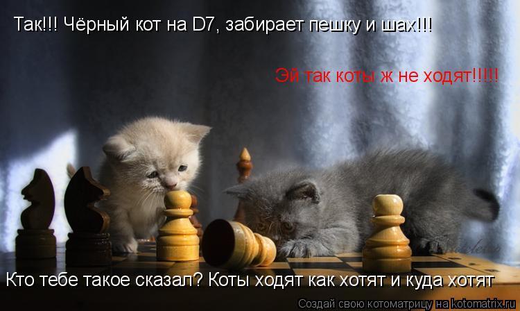 Котоматрица: Эй так коты ж не ходят!!!!! Так!!! Чёрный кот на D7, забирает пешку и шах!!! Кто тебе такое сказал? Коты ходят как хотят и куда хотят