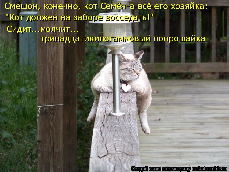 """Котоматрица: """"Кот должен на заборе восседать!"""" Смешон, конечно, кот Семён-а всё его хозяйка: Сидит...молчит... тринадцатикилогаммовый попрошайка"""