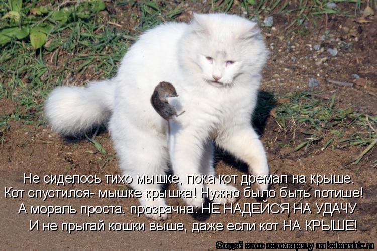 Котоматрица: Не сиделось тихо мышке, пока кот дремал на крыше. Кот спустился- мышке крышка! Нужно было быть потише! А мораль проста, прозрачна: НЕ НАДЕЙСЯ