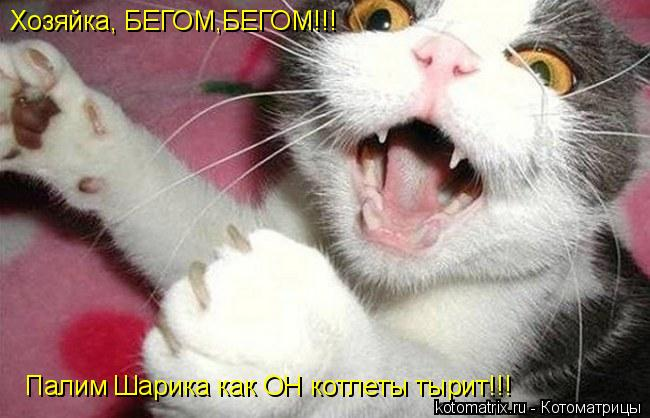 Котоматрица: Хозяйка, БЕГОМ,БЕГОМ!!!  Палим Шарика как ОН котлеты тырит!!!