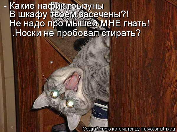 Котоматрица: - Какие нафик грызуны В шкафу твоём засечены?! Не надо про мышей МНЕ гнать! …Носки не пробовал стирать?