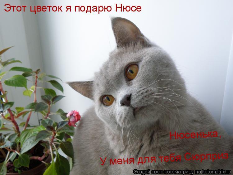 Котоматрица: Этот цветок я подарю Нюсе Нюсенька, У меня для тебя Сюрприз