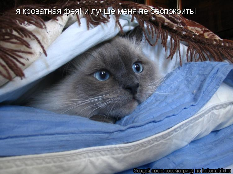 Котоматрица: я кроватная фея! и лучше меня не беспокоить!