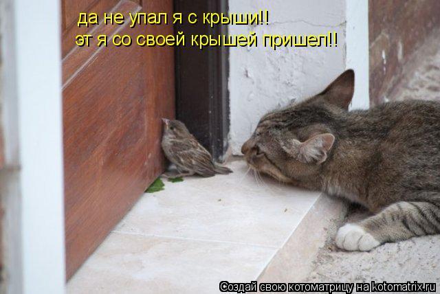 Котоматрица: да не упал я с крыши!! эт я со своей крышей пришел!!