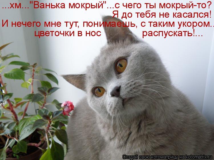 """Котоматрица: ...хм...""""Ванька мокрый""""...с чего ты мокрый-то? цветочки в нос               распускать!... И нечего мне тут, понимаешь, с таким укором... Я до тебя не"""
