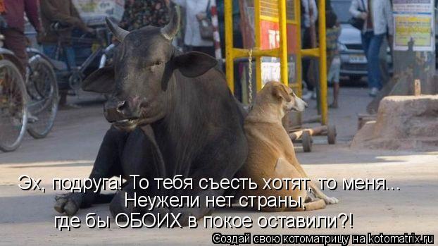 Котоматрица: Эх, подруга! То тебя съесть хотят, то меня... Неужели нет страны, где бы ОБОИХ в покое оставили?!