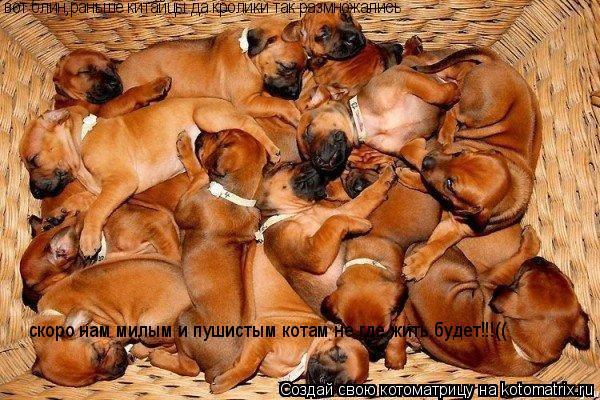 Котоматрица: вот блин,раньше китайцы да кролики так размножались скоро нам милым и пушистым котам не где жить будет!!!((