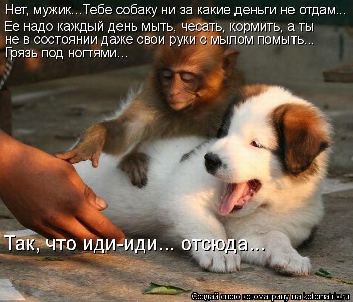 Котоматрица: Нет, мужик...Тебе собаку ни за какие деньги не отдам...  Грязь под ногтями... Так, что иди-иди... отсюда...  не в состоянии даже свои руки с мылом по