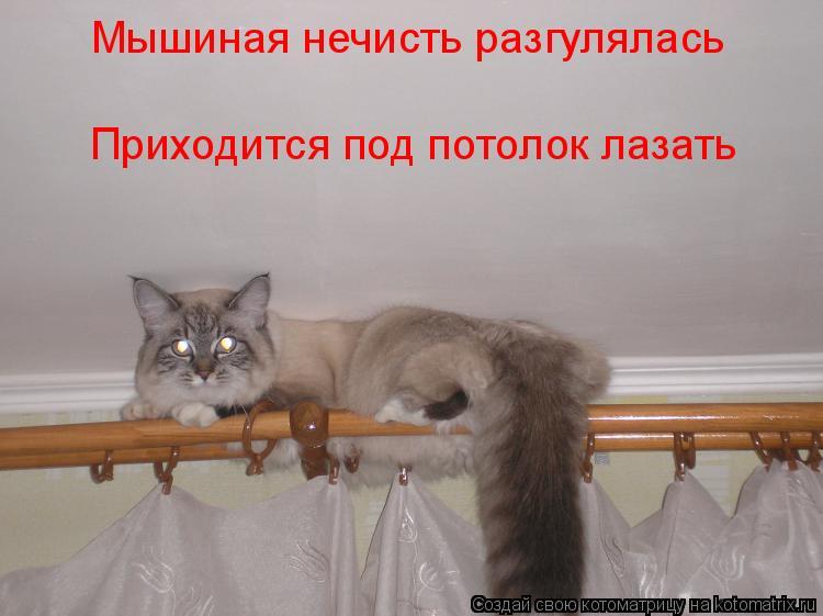 Котоматрица: Мышиная нечисть разгулялась Приходится под потолок лазать