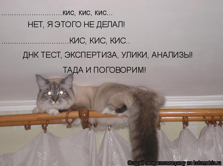 Котоматрица: ............................кис, кис, кис... НЕТ, Я ЭТОГО НЕ ДЕЛАЛ! ...............................КИС, КИС, КИС.. ТАДА И ПОГОВОРИМ!  ДНК ТЕСТ, ЭКСПЕР