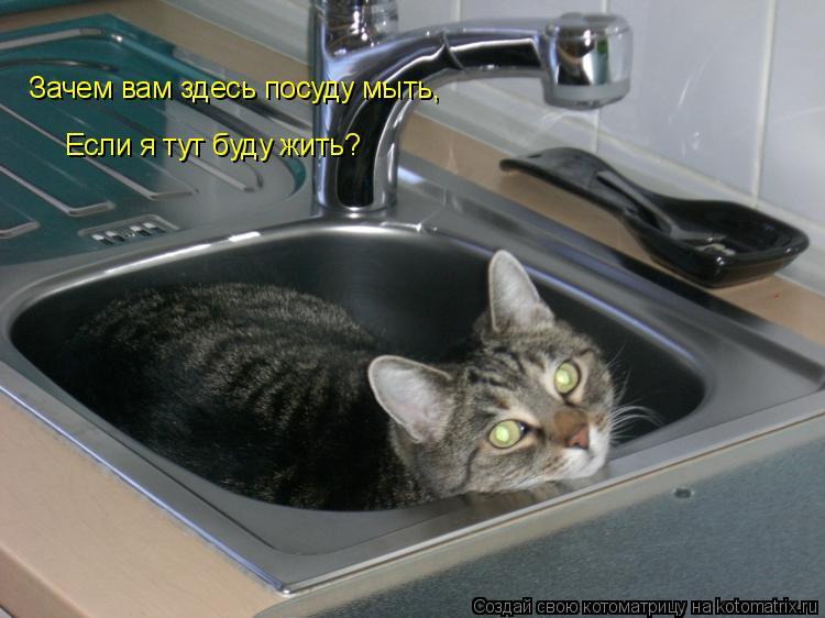 Котоматрица: Зачем вам здесь посуду мыть, Если я тут буду жить?
