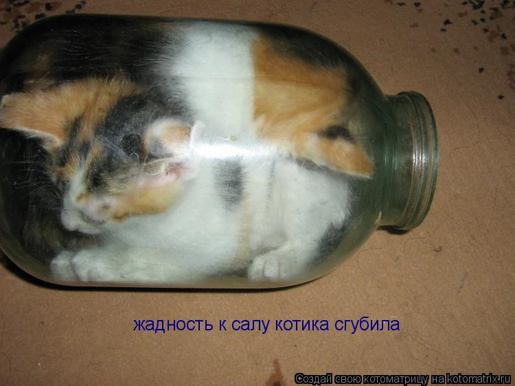 Котоматрица: жадность к салу котика сгубила