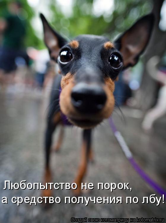 Котоматрица: Любопытство не порок,  а средство получения по лбу!