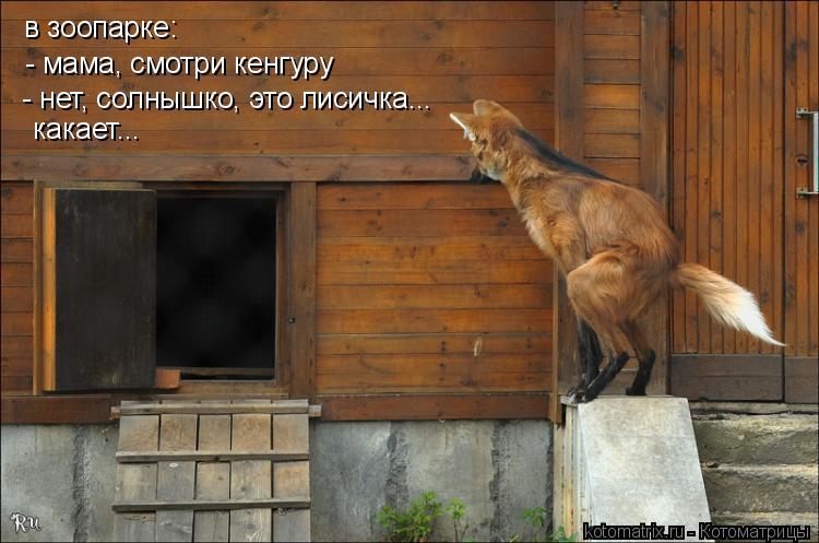 Котоматрица: в зоопарке: - мама, смотри кенгуру - нет, солнышко, это лисичка...  какает...