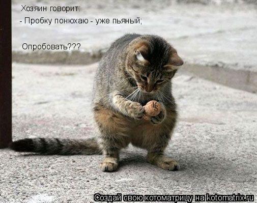Котоматрица: Хозяин говорит:  - Пробку понюхаю - уже пьяный; Опробовать???