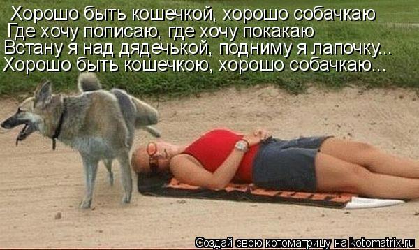 Котоматрица: Хорошо быть кошечкой, хорошо собачкаю Где хочу пописаю, где хочу покакаю Встану я над дядечькой, подниму я лапочку... Хорошо быть кошечкою, х
