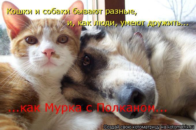 Котоматрица: Кошки и собаки бывают разные,  и, как люди, умеют дружить... ...как Мурка с Полканом...