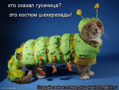 Котоматрица: кто сказал гусеница?  это костюм шехерезады!