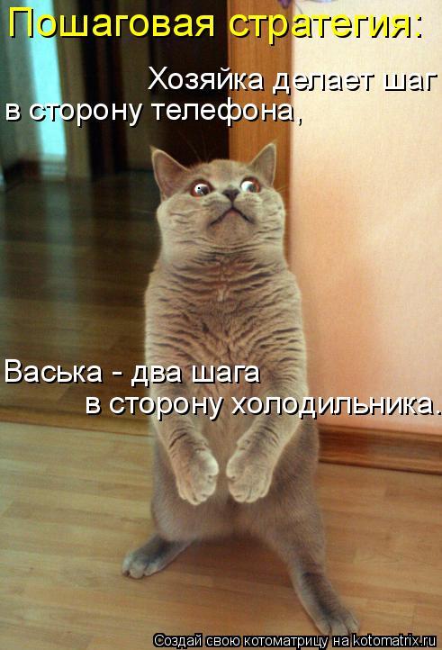 Котоматрица: Пошаговая стратегия: Хозяйка делает шаг в сторону телефона, Васька - два шага в сторону холодильника.