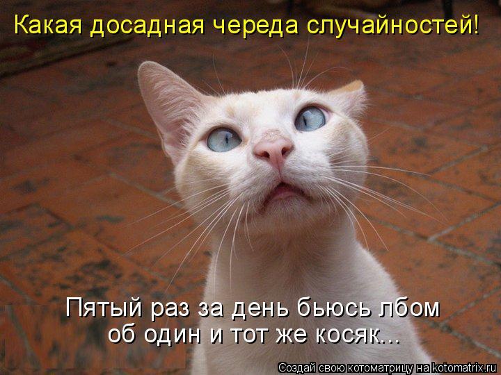 Котоматрица: Какая досадная череда случайностей! Пятый раз за день бьюсь лбом об один и тот же косяк...