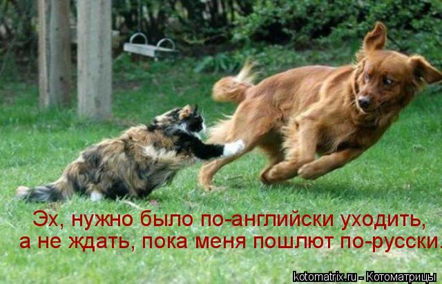 Котоматрица: Эх, нужно было по-английски уходить,  а не ждать, пока меня пошлют по-русски.