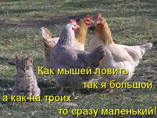 Котоматрица: Как мышей ловить - так я большой, а как на троих - то сразу маленький!