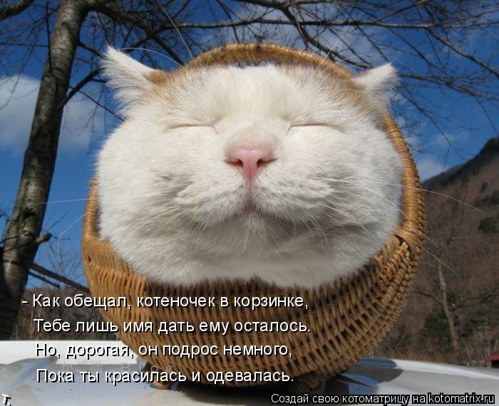 Котоматрица: - Как обещал, котеночек в корзинке, Тебе лишь имя дать ему осталось. Но, дорогая, он подрос немного, Пока ты красилась и одевалась.