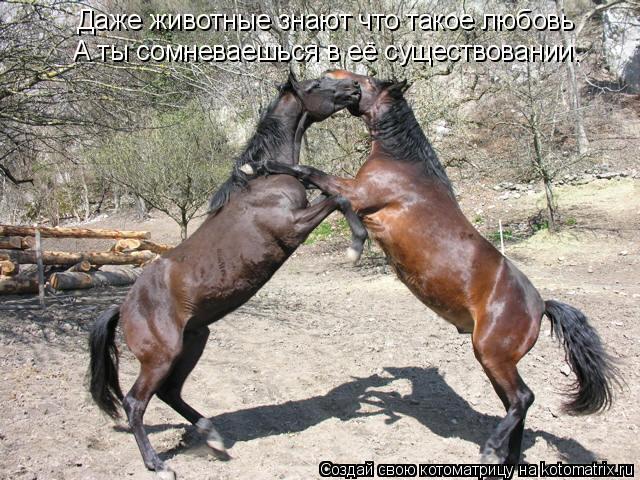 Котоматрица: Даже животные знают что такое любовь А ты сомневаешься в её существовании.