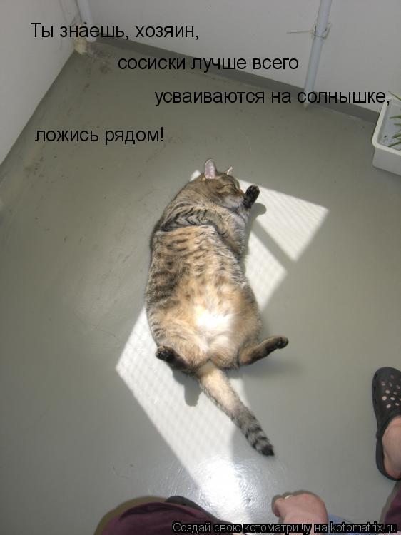 Котоматрица: сосиски лучше всего усваиваются на солнышке, Ты знаешь, хозяин, ложись рядом!
