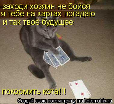 Котоматрица: заходи хозяин не бойся  я тебе на картах погадаю и так твоё будущее покормить кота!!!