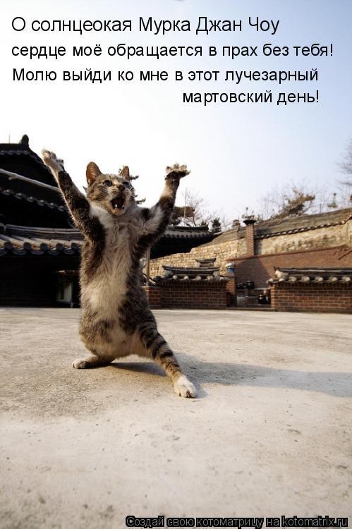 Котоматрица: О солнцеокая Мурка Джан Чоу  сердце моё обращается в прах без тебя! Молю выйди ко мне в этот лучезарный мартовский день!