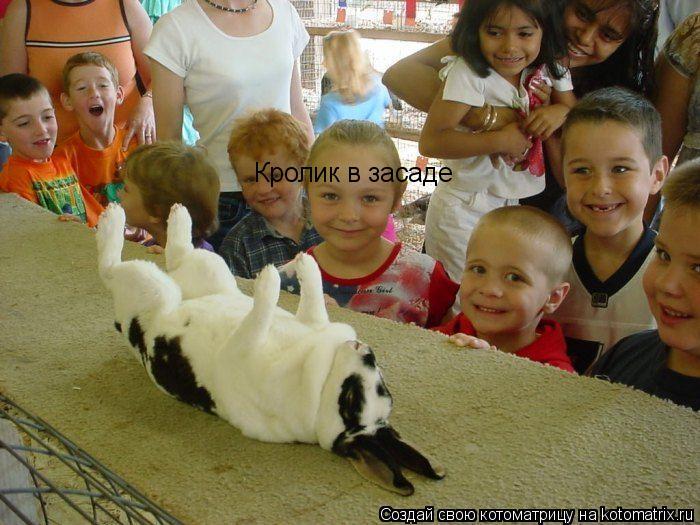 Котоматрица: Кролик в засаде