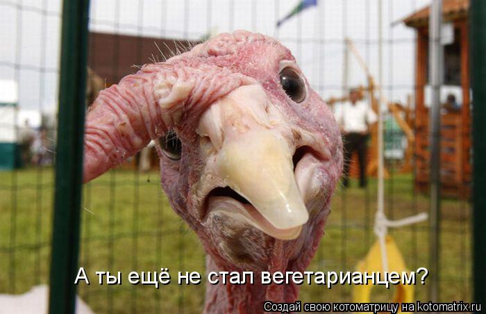 Котоматрица: А ты ещё не стал вегетарианцем?