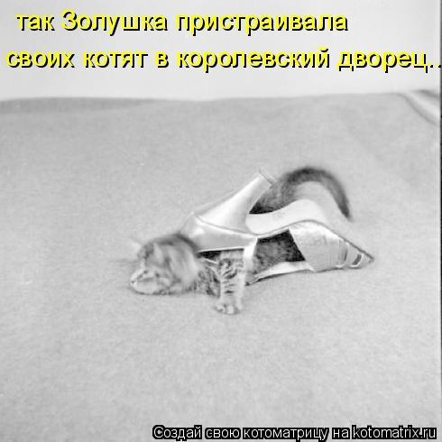 Котоматрица: так Золушка пристраивала своих котят в королевский дворец...