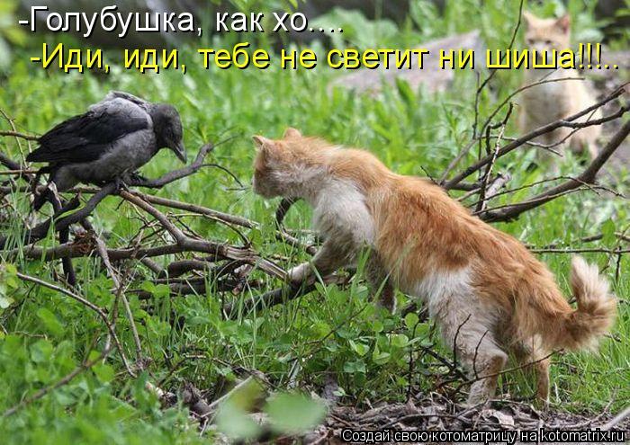 Котоматрица: -Голубушка, как хо.... -Иди, иди, тебе не светит ни шиша!!!..