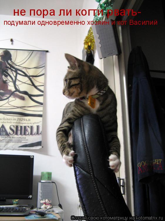 Котоматрица: подумали одновременно хозяин и кот Василий не пора ли когти рвать-